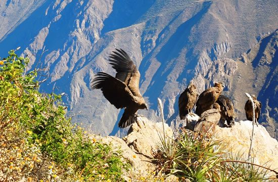 Arequipa – Colca Canyon <span>1 day <br> full day</span>